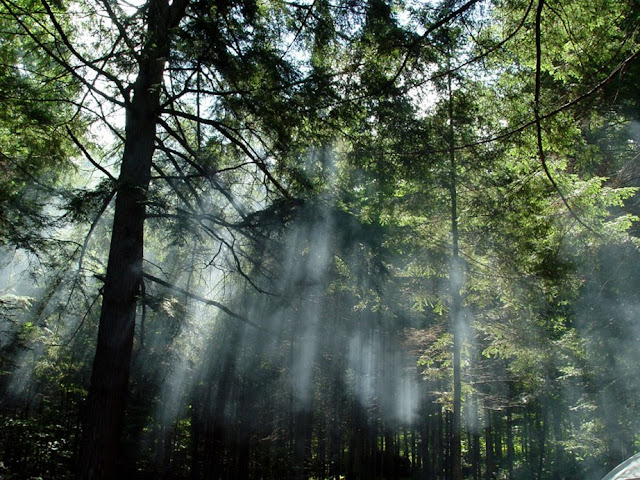 Floresta Estadual de Piraju