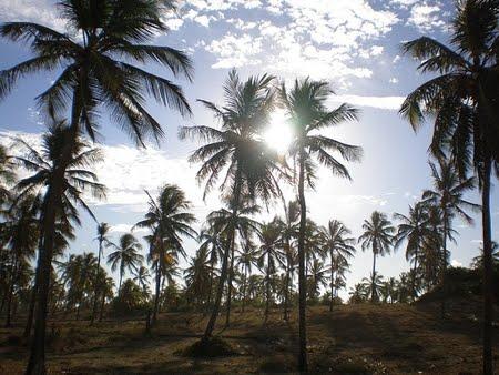 Reserva Biológica Santa Isabel | Sergipe