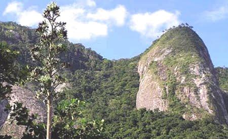 Parque Estadual da Serra da Tiririca | Rio de Janeiro