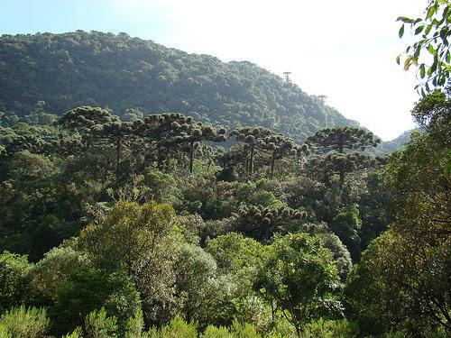 Parque Estadual das Auracárias   Santa Catarina