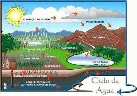 Limnociclo ou Biociclo da Água Doce