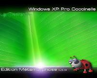 xp coccinelle metamorphose