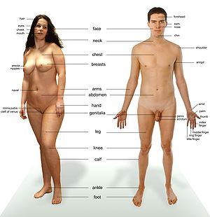 A Human Dick 84