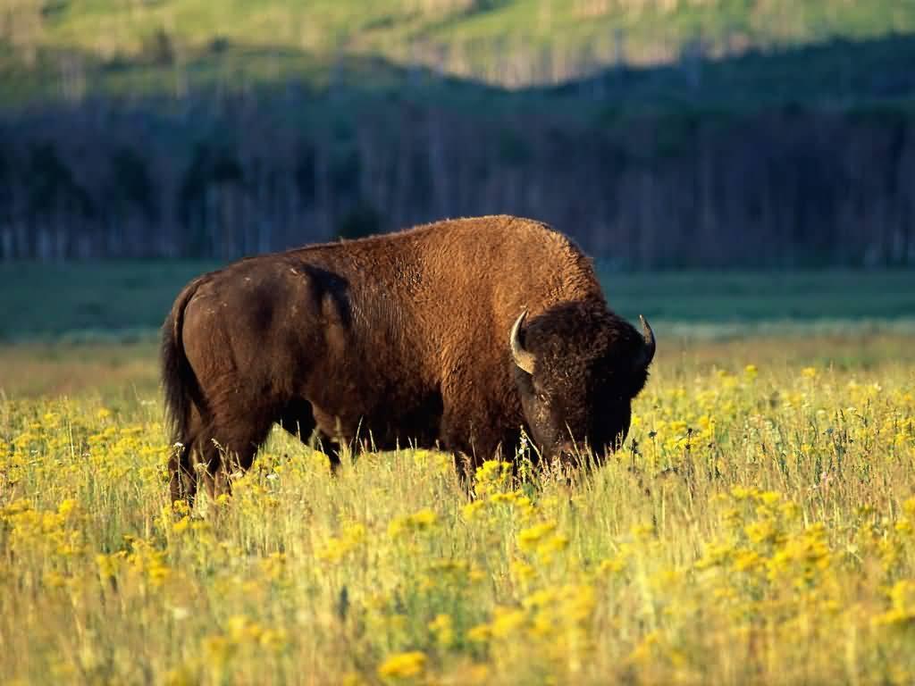 Wyoming drive trip