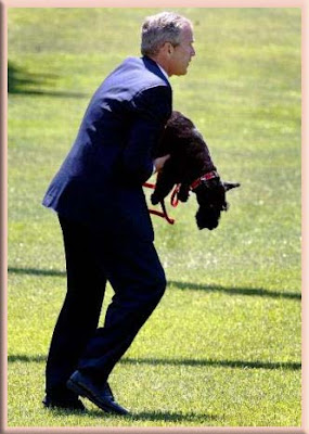 President Bush With Quot Scottish Terriers Quot