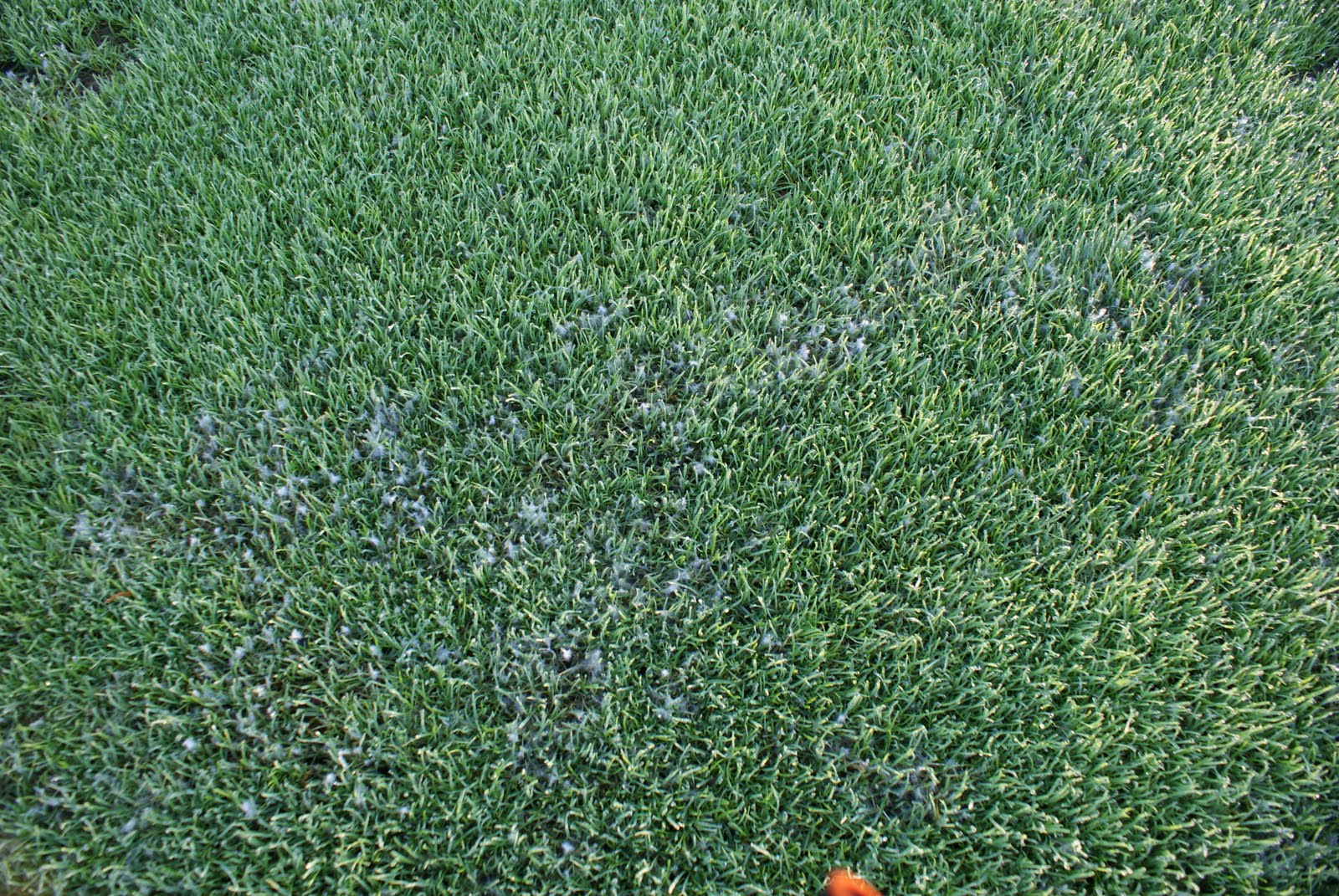 Sugar Creek Golf Course Blog: Turf Notes: Pythium Blight