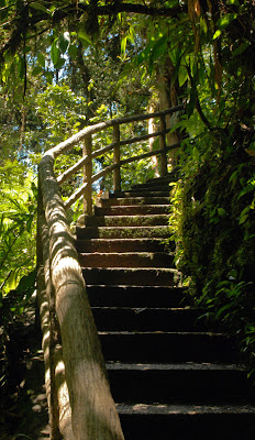 A Visit to La Paz Waterfall Gardens in Costa Rica