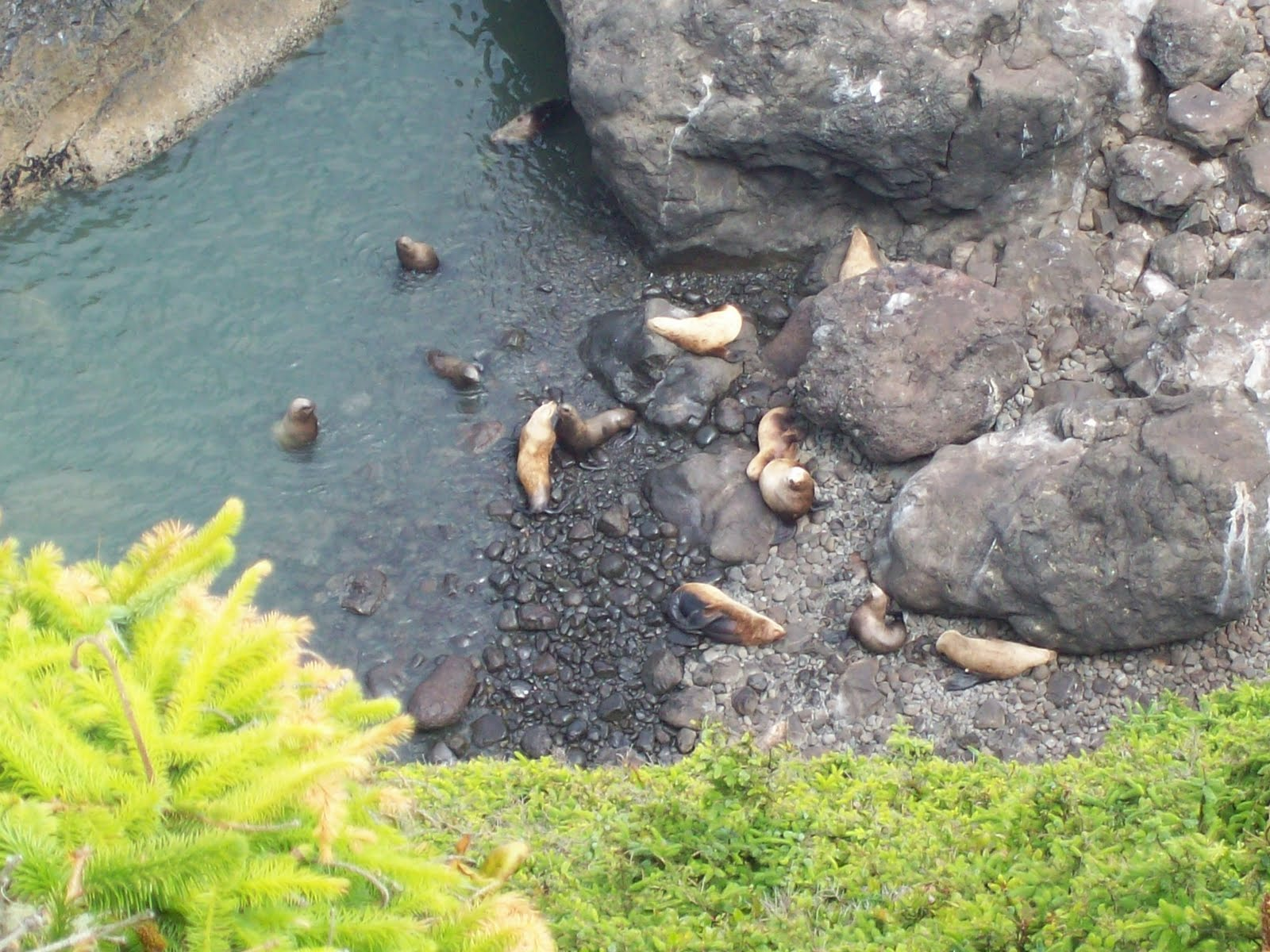 The Chester Nesters: Sea Lion Caves