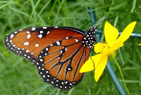 Garden and Yard: How to Attract Butterflies and ...