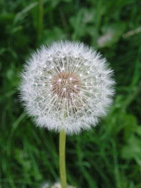 Natural Ways To Help Hay Fever