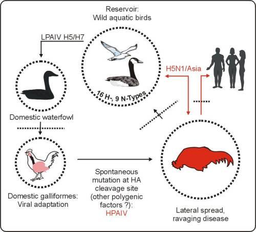 Warung Kesehatan: Menu 12 : Waspada Avian Flu