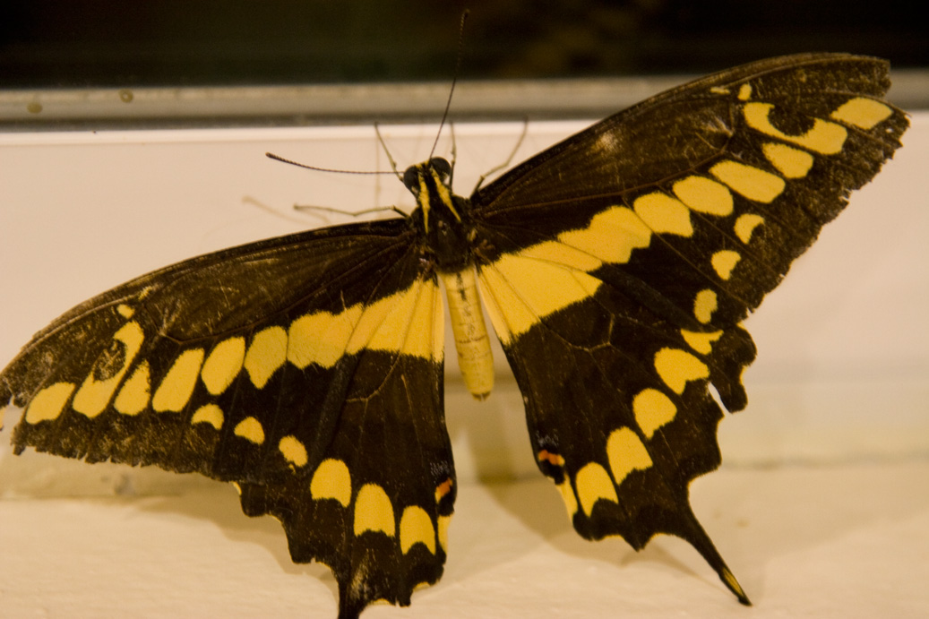 Palm Springs Daily Photo: Dead Butterfly