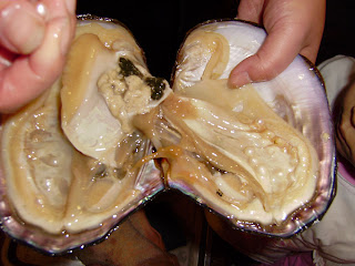 Mejillon con perlas - 4 8