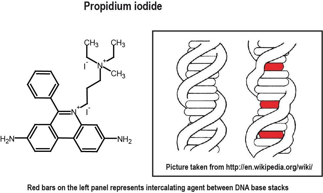 BioFreaks Biochemistry Blog (v.Beta): May 2010