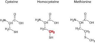 BioFreaks Biochemistry Blog (v.Beta): Biochemistry Exams
