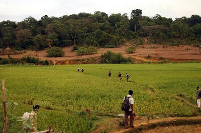 Walking through paddy fields