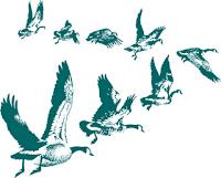 Aves migratórias em voo