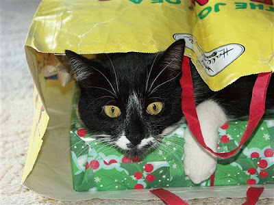 cat with Christmas gift