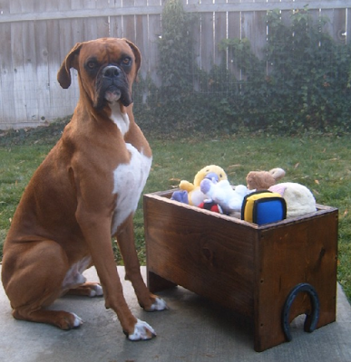 toy box with dog