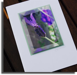 lavender flower photo card gift card newcreationz