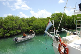 Charter Yacht Promenade tying up in the mangroves