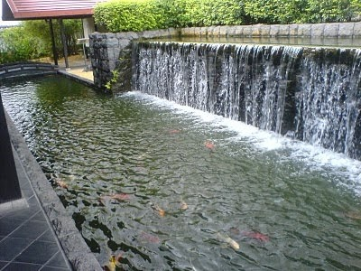 Koi pond with waterfall koi fish care info for Garden pond no filter
