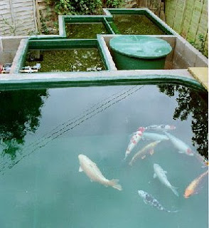 Koi pond filtration koi fish care info for Pond filter setup