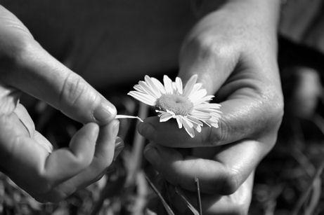 he-loves-me-he-loves-me-not-flower.jpg