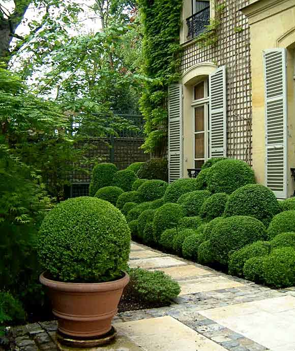Tuscan House Style With Front Walkway And Italian Cypress: BOXWOOD TERRACE: Now This Is A Boxwood Terrace