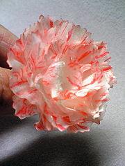 ไอเดียถาดใส่ไข่ ทำเป็นดอกไม้ ถาดไข่ทำอะไรดี कैसे पुराने अंडे की ट्रे पुन: उपयोग विचार वेलेंटाइन उपहार DIY प्यारा गुलाब से फूल गुलाब के लिए