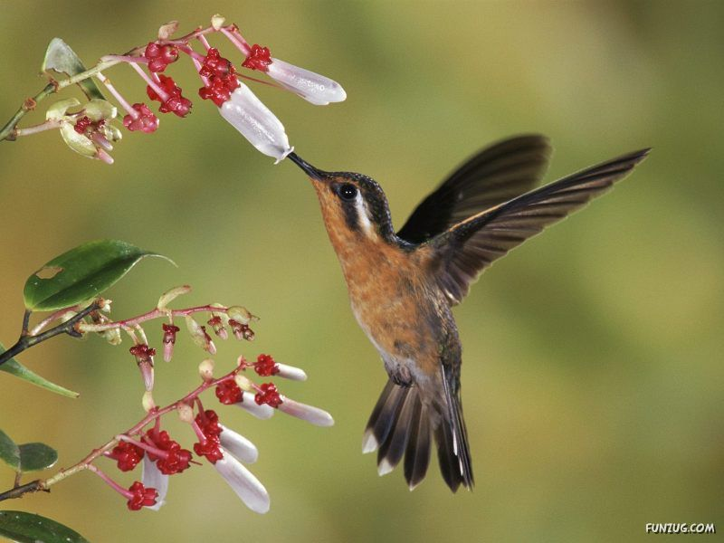 Victorious Star Beautiful Wild Song Birds