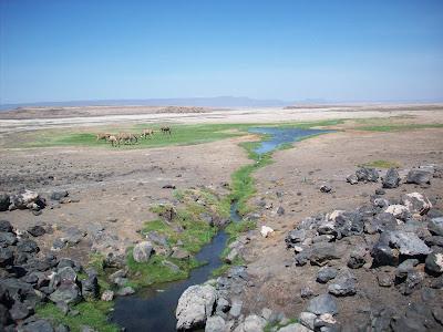 Ann and John's African Adventure: Lac Abbe' - Djibouti