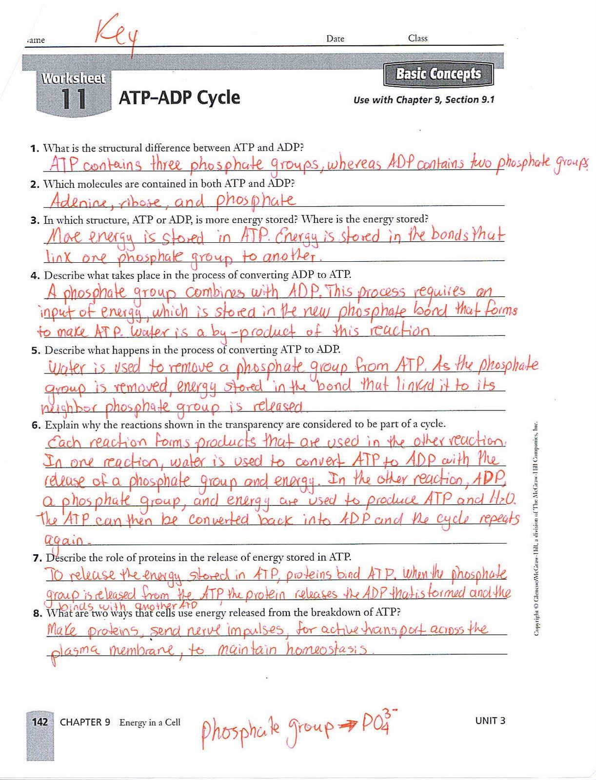 Worksheets 9th Grade Biology Worksheets Waytoohuman Free