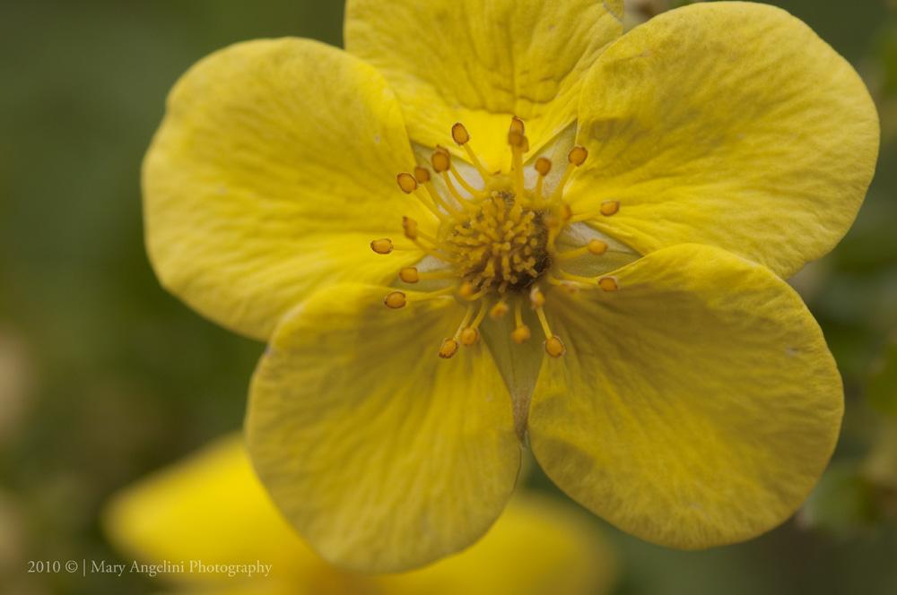 Mary Angelini Photography Chicago Botanic Gardens Sat 9