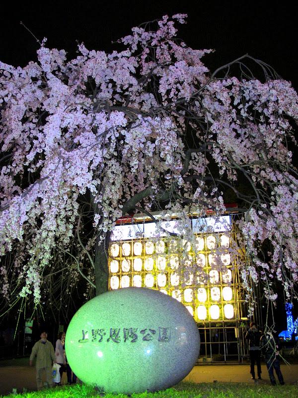 2010 Sakura Culinary Trip: Izuei Unagi (伊豆栄) & Gyunochikara Gyudon (牛の力), Ueno