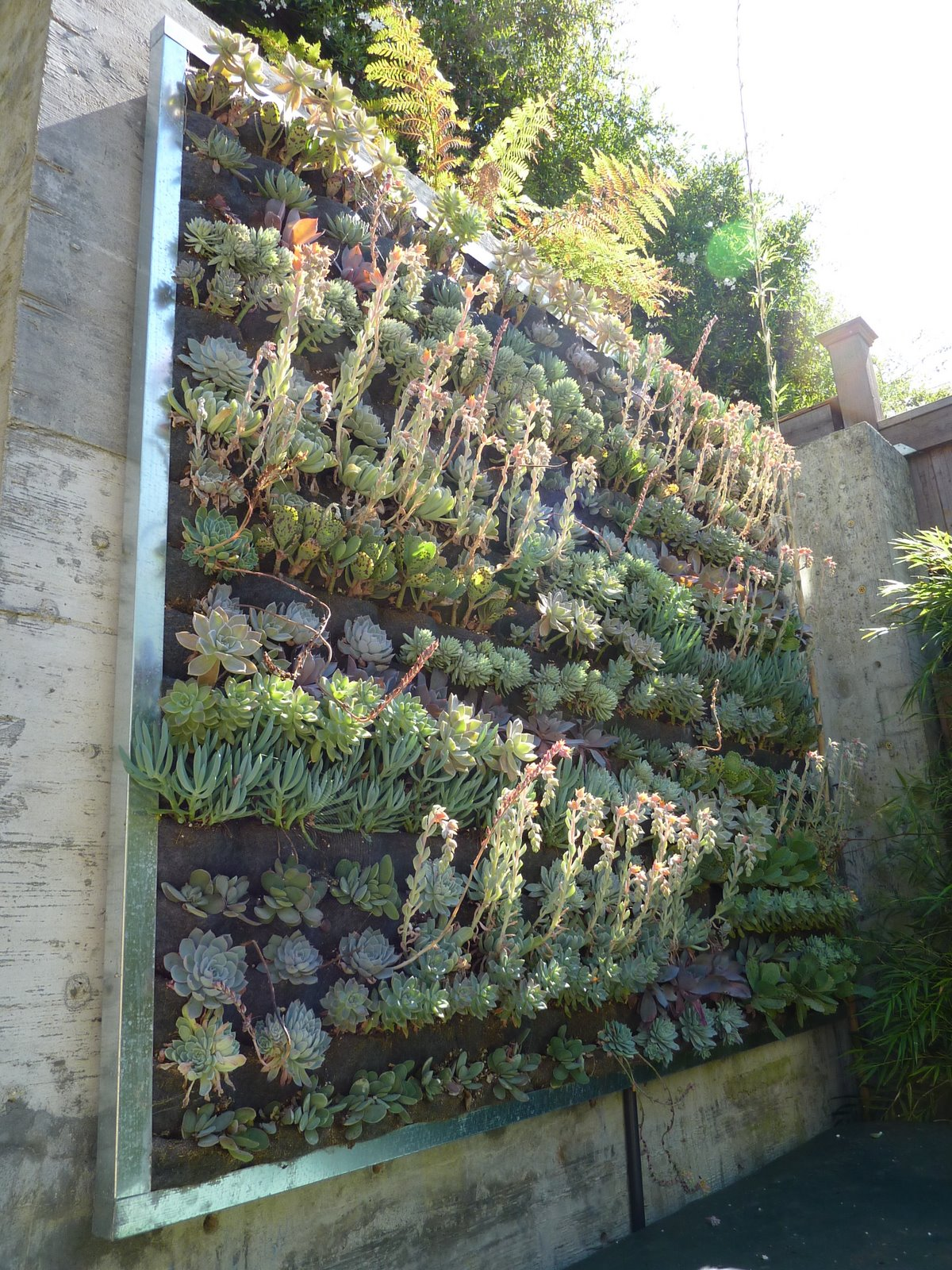 plants on walls vertical garden systems september 2010. Black Bedroom Furniture Sets. Home Design Ideas