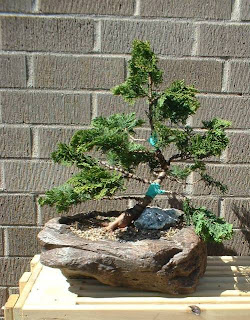 Articles Taming The Quot Hinoki Quot Cypress 201 Addendum