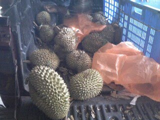 Durians galore!