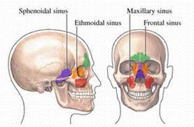 How to Prevent & Relieve Sinus Tooth Pain?