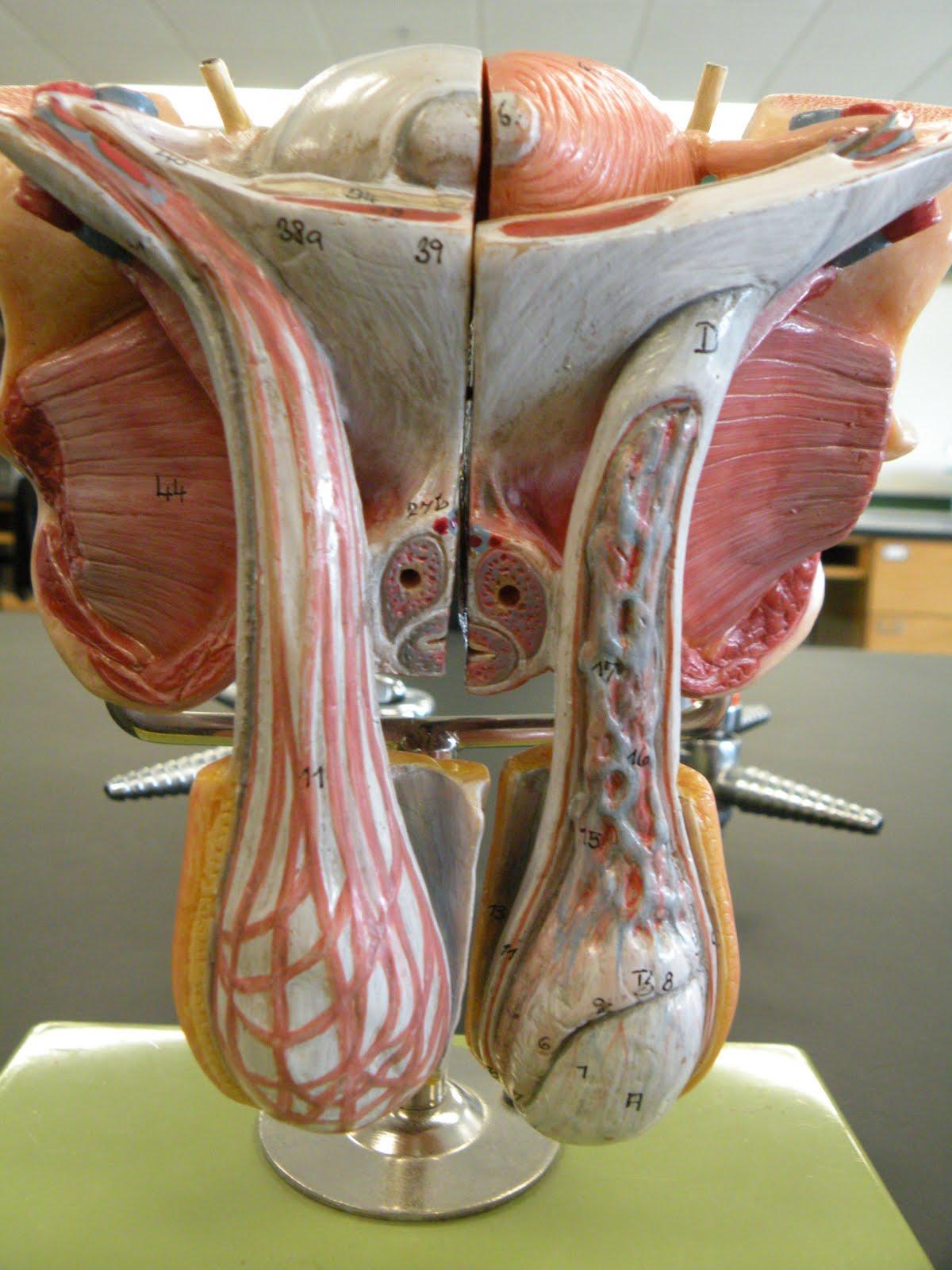 Деформация половых органов и грудей у женщин фото крупно