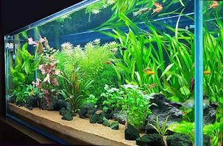 Acuario virtual acuariofilia for Como hacer una laguna artificial para peces