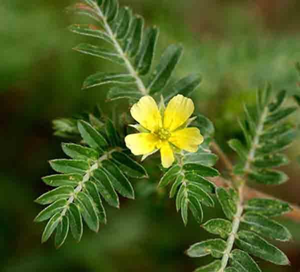 فوائد نبات الحسك لعلاج 8