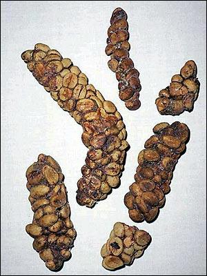 Seed The Farm Kopi Luwak