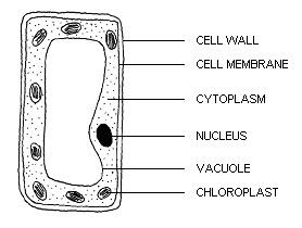 PMR Revision - Science: F1C2 Cell as A Basic Unit of Life