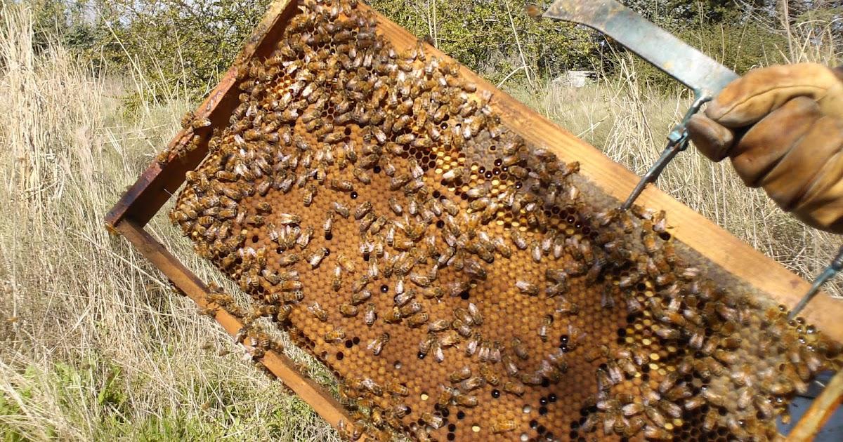 Cadalso vive en cadalso tenemos miel - Cadalso vive ...