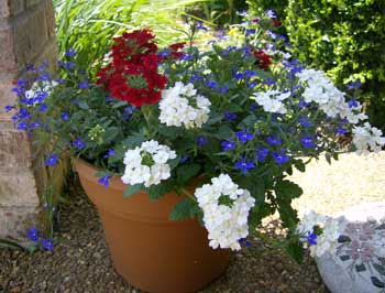 Garden Take Over With Red White And Blue 24 7 Moms