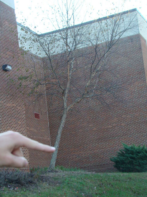 Art Of Apex High School Forced Perspective
