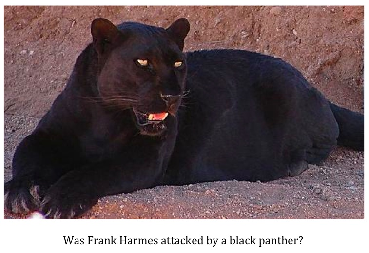 Texas Cryptid Hunter Alabama Man Attacked By A Black Panther
