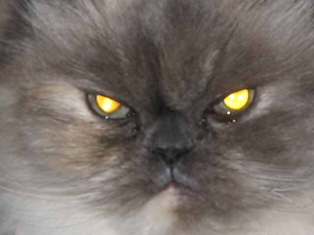 Mighty Lists 10 Evil Cats