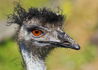 Mighty Lists 15 really ugly birds